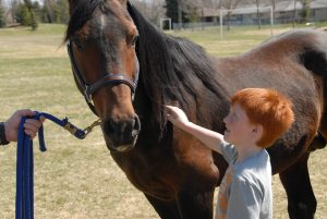 equine assisted therapy darlington