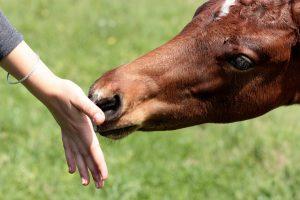 horse-1341775_1280
